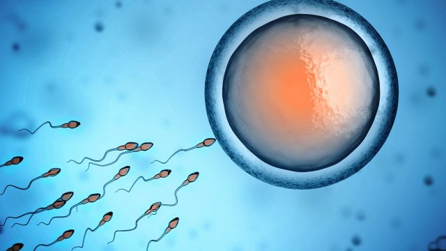 Does Life Begin at Conception or Fertilization? The Answer Could Make a Huge Difference